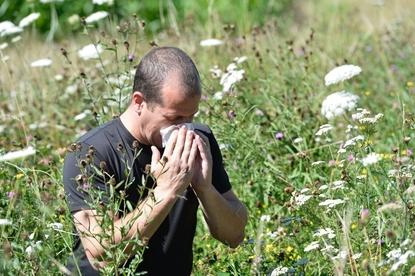 Alergia na pyłki drzew i traw. Jak łagodzić objawy uczulenia na pyłki?