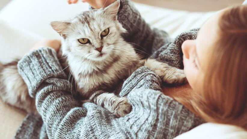 dziecko z alergią na sierść kota