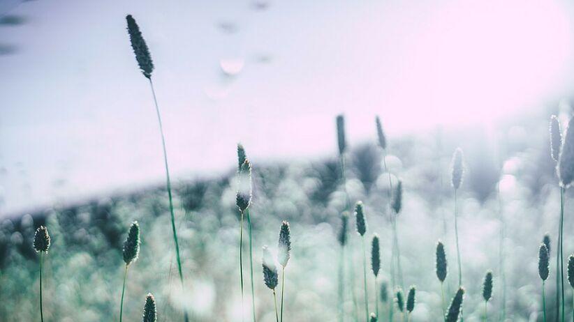 Okiem eksperta: Alergia – coraz częstszy problem