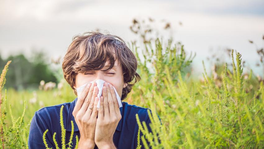 Katar sienny to zmora alergików. Jak leczyć alergiczny nieżyt nosa?