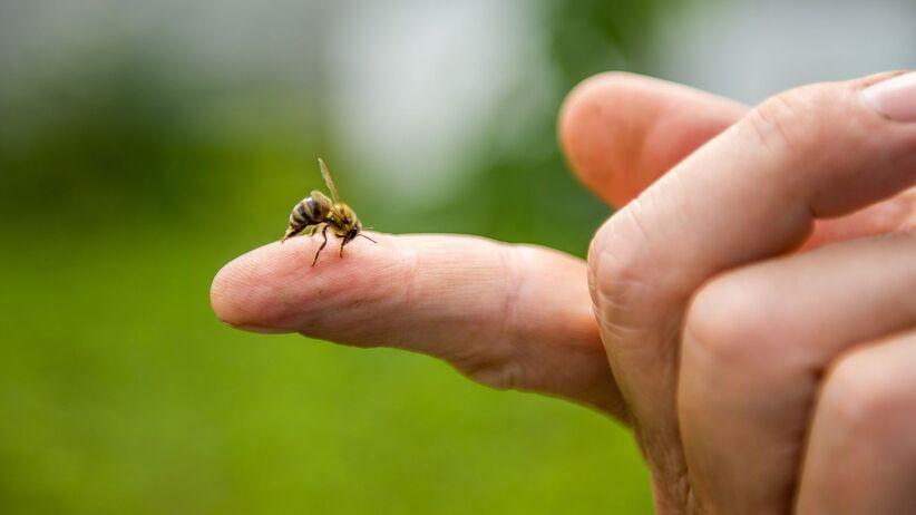 Uczulenie na jad owadów
