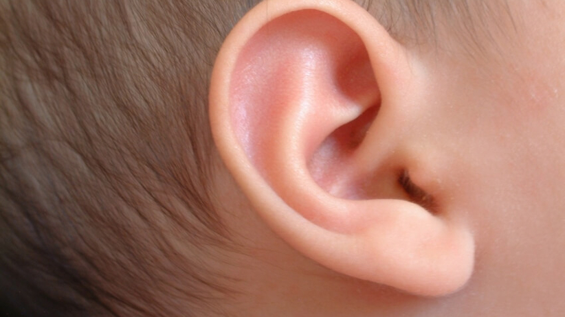 przeszczep ucha