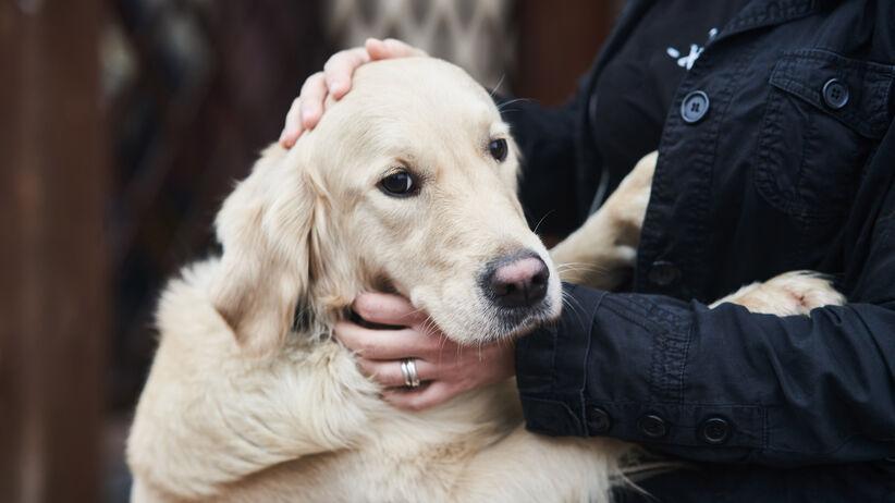 Czy psy moga wykryć koronawirusa>