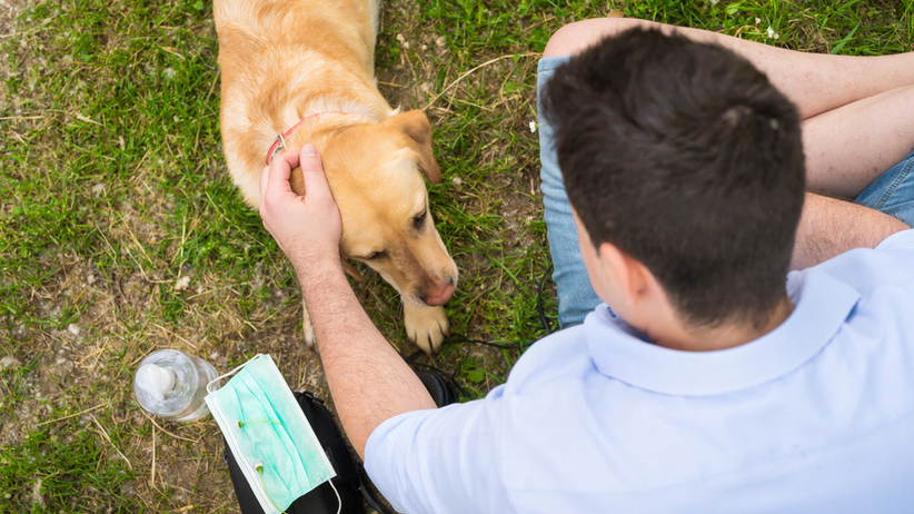 Koronawirus: psy tropiące pomogą w wykrywaniu COVID-19