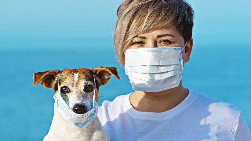 Koronawirus u zwierząt: zarażony pies poddany kwarantannie