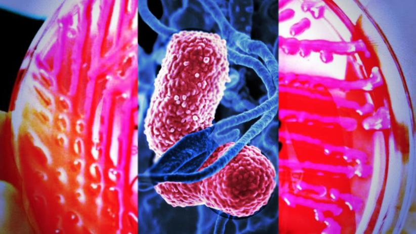 Superbakteria odporna na antybiotyki grasuje w polskich szpitalach