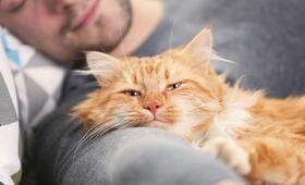 Schizofrenia a choroba kociego pazura - jakie powiązania