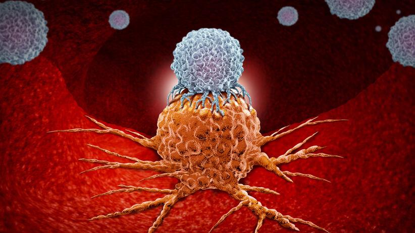Naukowcy odkryli nowy typ limfocytów T