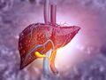 El diagrama muestra el hígado humano.