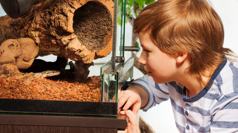 Małe zwierzęta domowe są nosicielami Salmonelli