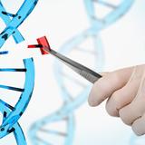 Badania genetyczne, łańcuch DNA