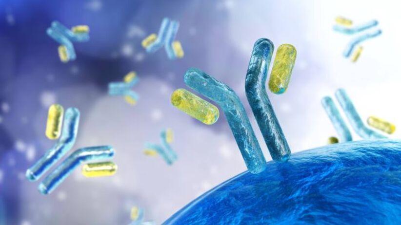 Przeciwciała - immunoglobuliny