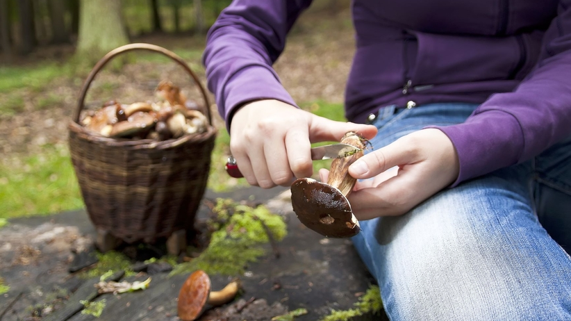 Zatrucie grzybami - statystyki
