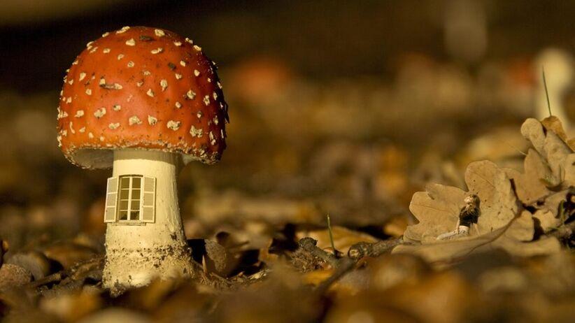 Co robić w przypadku zatrucia się grzybami?