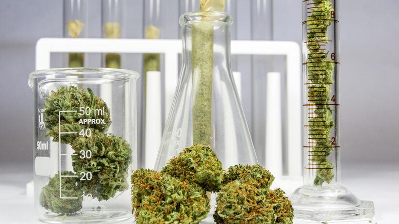 Medyczna marihuana wciąż niedostępna