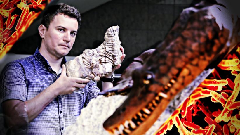 Gruźlica: najstarsze ślady. Paleontolog Dawid Surmik prezentuje na Uniwersytecie Śląskim, 6 bm., fragment szkieletu proneustikozaura, morskiego gada sprzed 245 milionów lat odkrytego na przełomie XIX i XX wieku w Gogolinie. Naukowiec zwrócił uwagę na guzkowate narośla którymi pokryte były żebra. Dzięki temu wraz z grupą innych badaczy udało się odkryć najstarszy przypadek infekcji oddechowej, najpewniej gruźlicy.