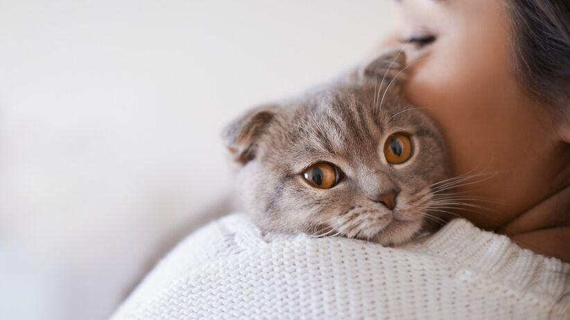 Koty a koronawirus