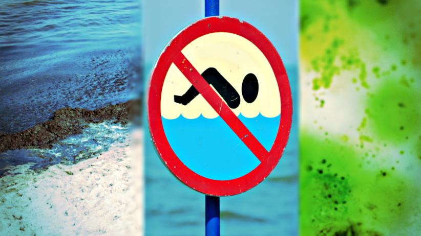 sinice w Bałtyku, zakwit wody, lista zamkniętych kąpielisk nad Zatoką Gdańską
