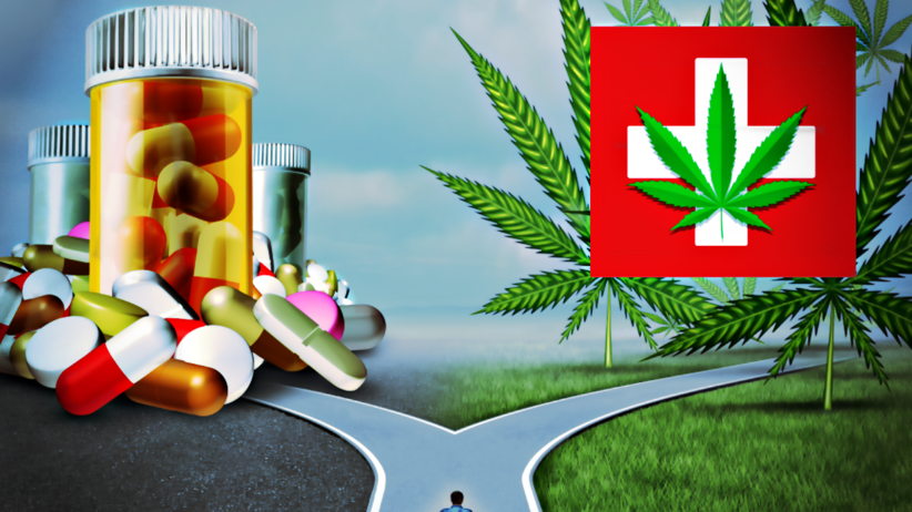 Polscy naukowcy wymyślili tabletkę przeciwbólową z... marihuany!
