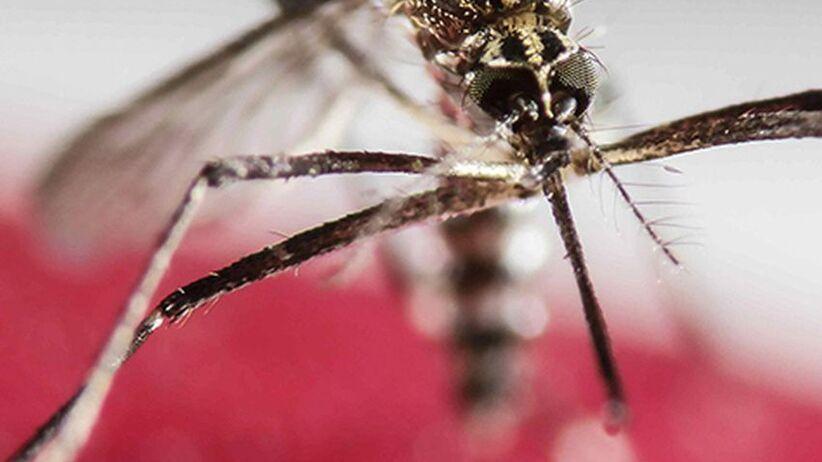 Mamy pierwsze dwa przypadki wirusa Zika w Polsce!