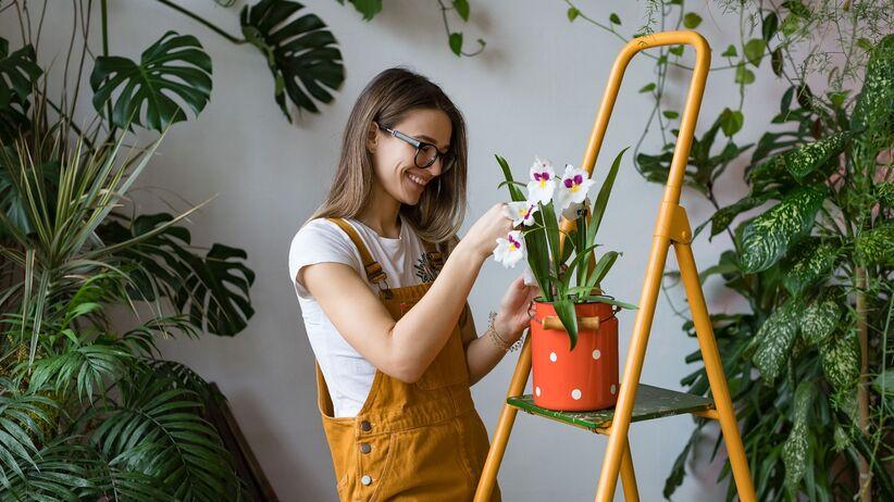 5 roślin, które poprawiają Twój nastrój