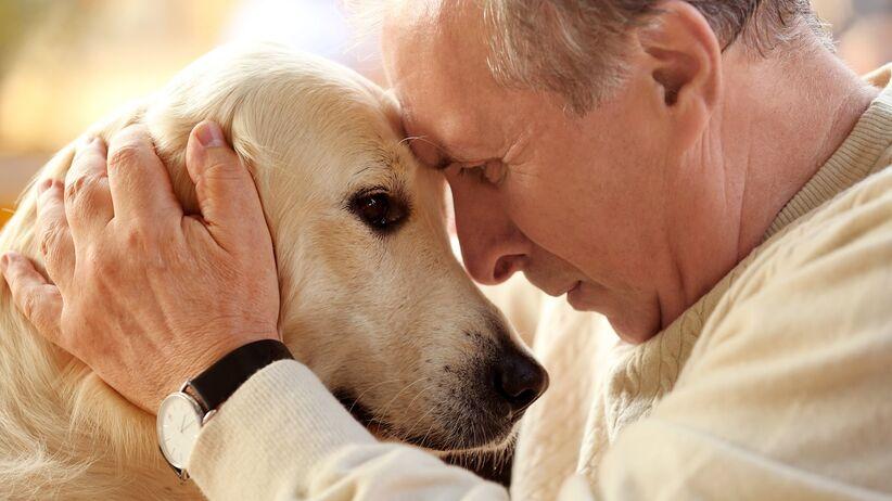 Pies i starszy człowiek - dogoterapia
