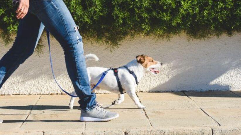Spacer - liczenie kroków