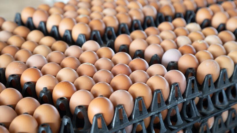 Salmonella w jajkach.