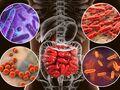 Flora intestinal y obesidad