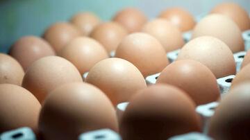 podczas erekcji wzrasta jedno jajko erekcja znika w odpowiednim momencie
