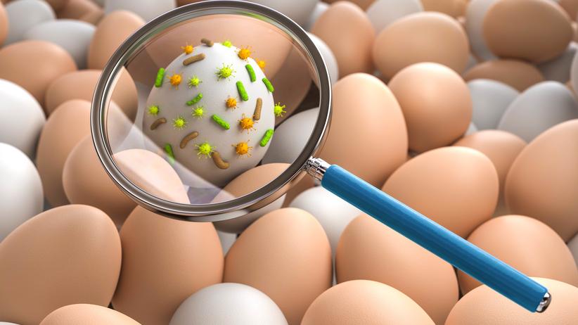 Zakażenie bakteriami Salmonelli prowadzi do rowoju salmonellozy