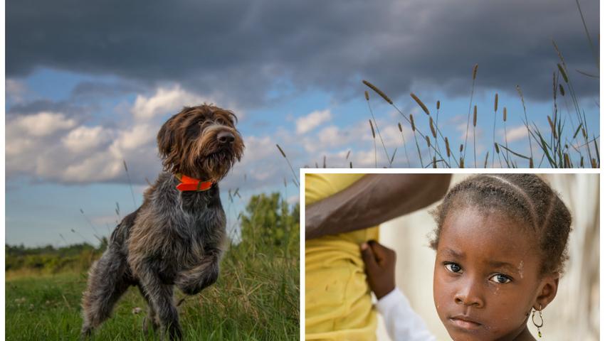 Psy wyczują malarię