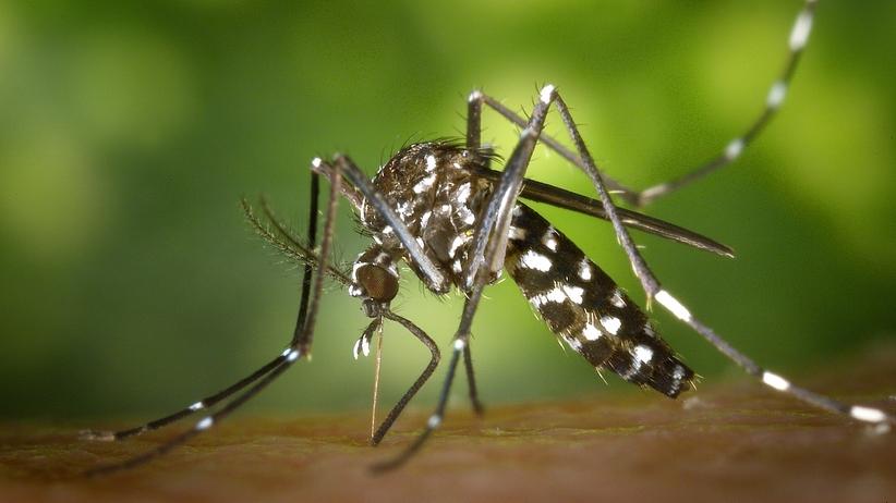 Jak walczyć z komarami? Te domowe sposoby są najlepsze