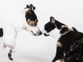 Czym można zarazić się od psów i kotów?