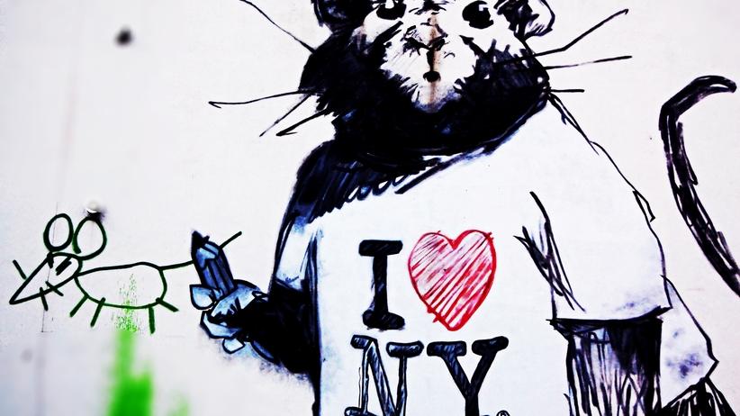 Groźna choroba przenoszona przez szczury atakuje w Nowym Jorku