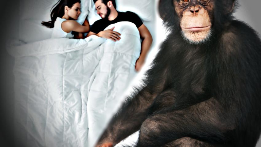 Bakterie w łóżkach: dlaczego jest ich więcej niż w legowiskach szympansów?