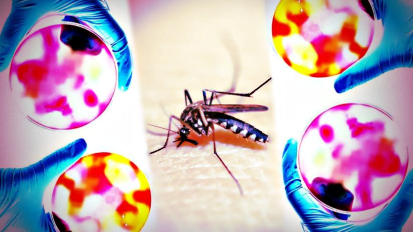 4-letnia Włoszka zmarła na malarię. Pierwszy taki przypadek od 20 lat