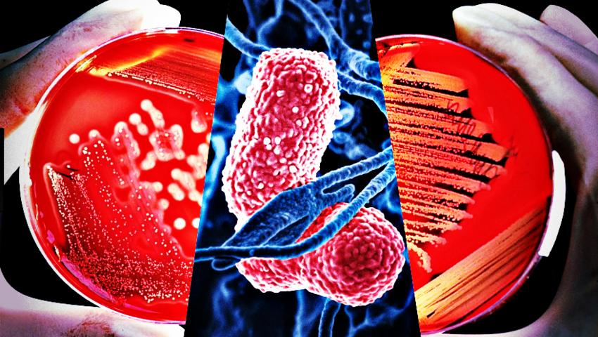 Superbakterie atakują na Pomorzu. Jak się chronić?