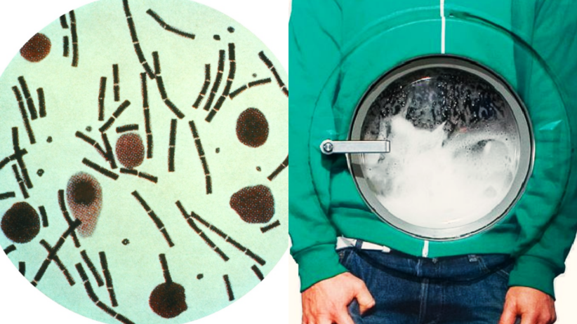 Wąglik, toksyny i szkodliwe drobnoustroje na ubraniach z sieciówek