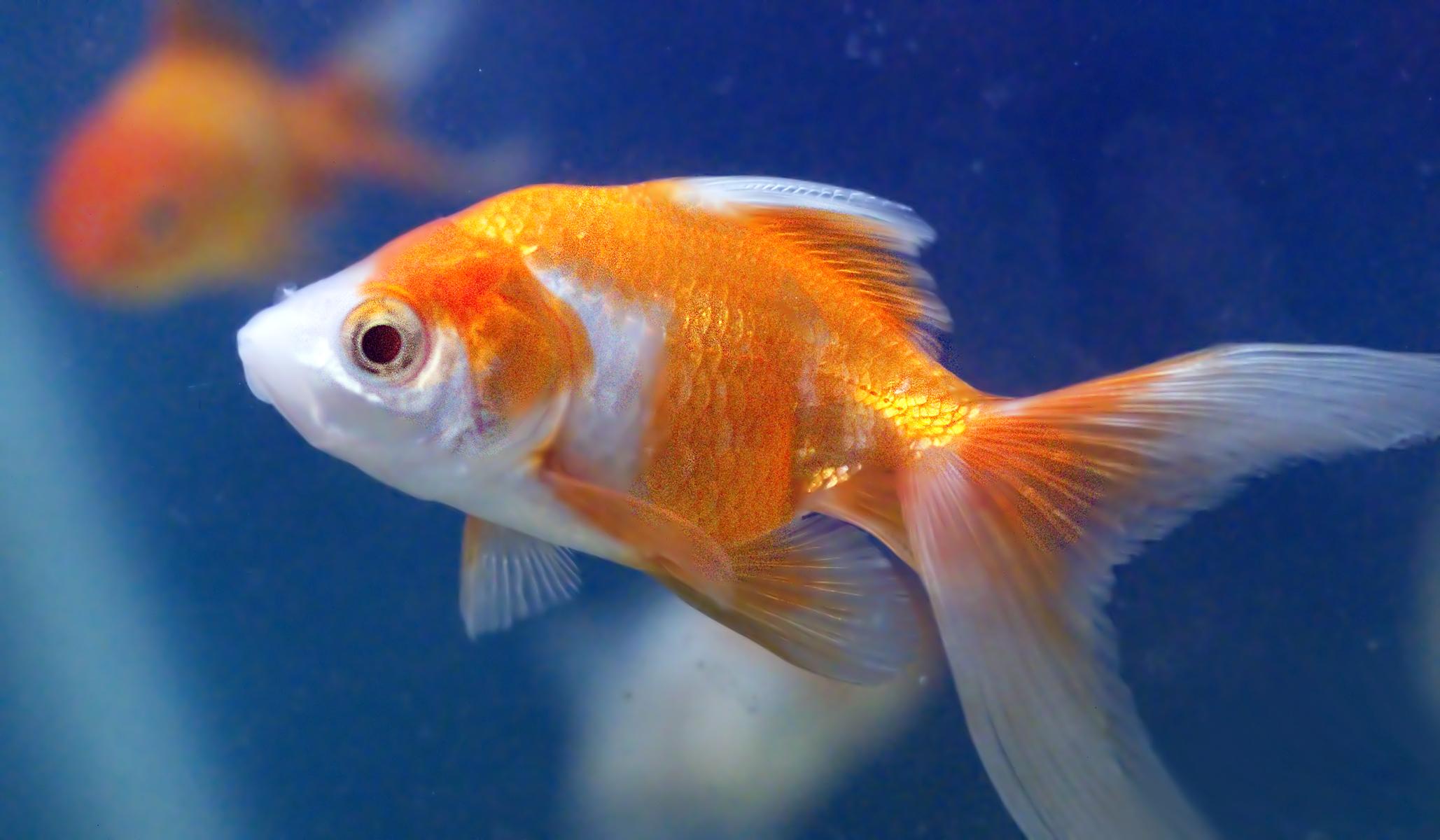 Myślisz, że wiesz wszystko o rybach? Sprawdź swoją wiedzę!