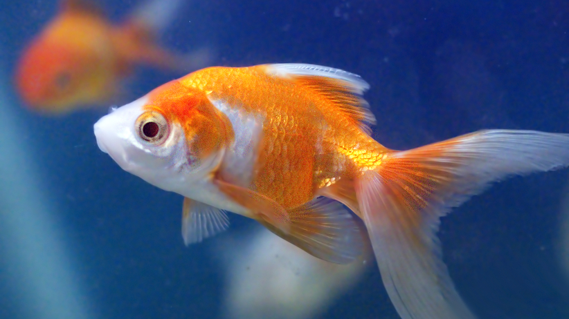 Najciekawsze fakty na temat ryb. Sprawdź, czego nie wiesz! (QUIZ)