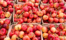 Czereśnie są bogate w witaminy i doskonale wpływają na kondycję skóry, układu pokarmowego, serca i nerek