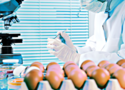 Uwaga! 4,3 mln jajek wycofanych z polskich sieci handlowych. GIS ostrzega