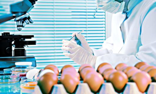 Jajka: 4 mln sztuk ma zostać wycofanych z polskich supermarketów