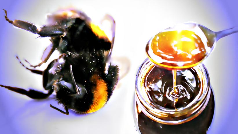 W miodzie są te same pestycydy, które doprowadziły do zagłady pszczół?