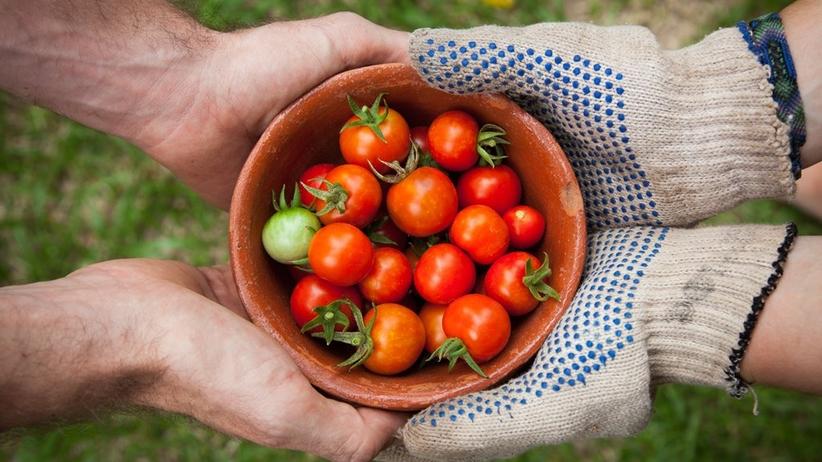 Wartości odżywcze pomidorów. Dlaczego warto je jeść?