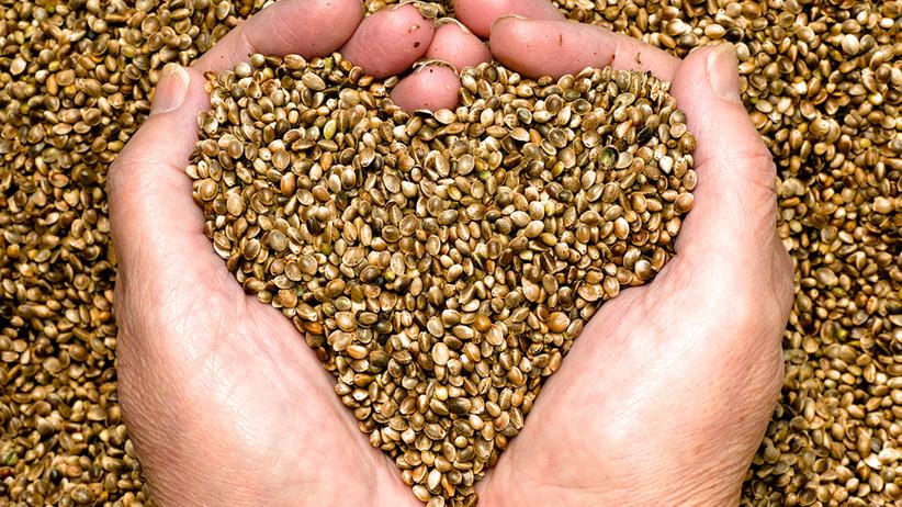 Zdrowie z konopi - 5 produktów o najwyższej wartości odżywczej