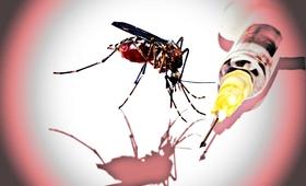 Pierwsza na świecie szczepionka przeciwko malarii trafi do Afryki