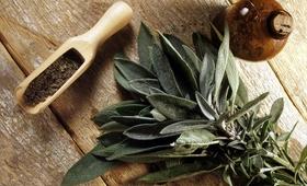 Szałwia lekarska to roślina wszechstronna. Jak z niej korzystać?