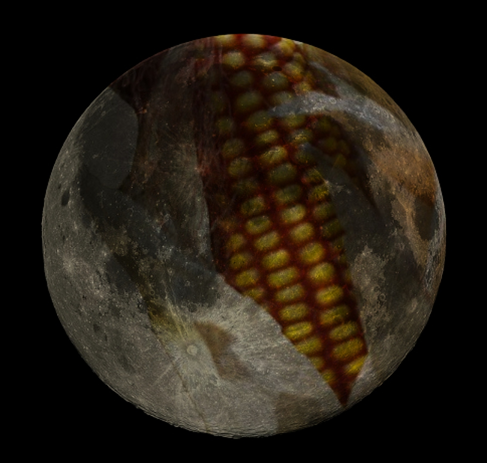full-corn-moon-wikipedia